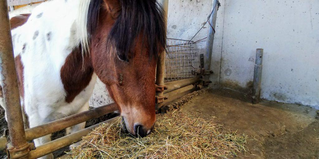 かわいい馬